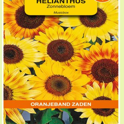 helianthus-annuus-musicbox