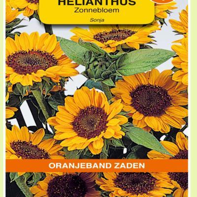helianthus-annuus-sonja
