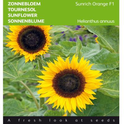 helianthus-annuus-sunrich-orange-f1