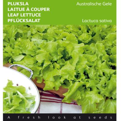 lactuca-sativa-australische-gele