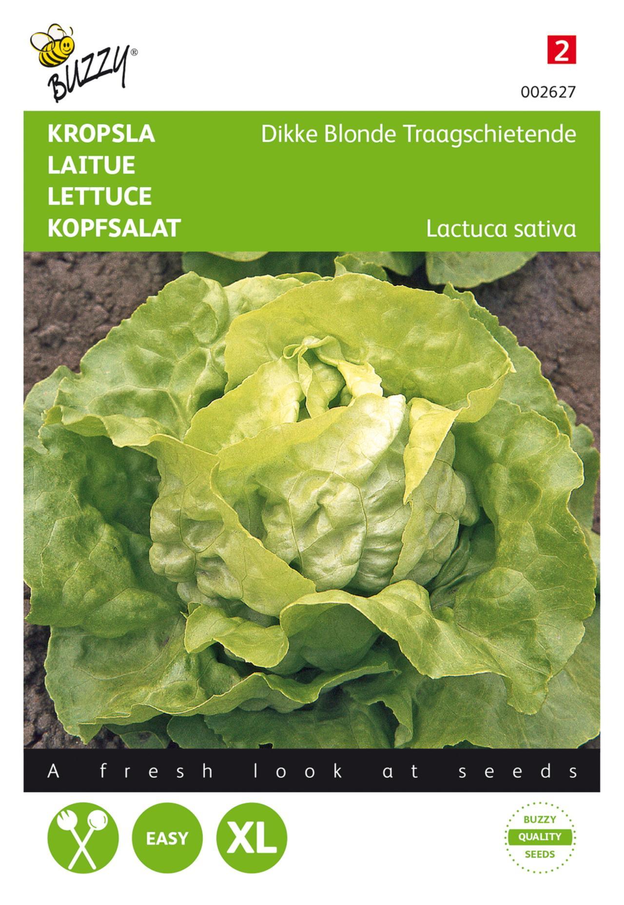 Lactuca sativa 'Dikke Blonde' plant