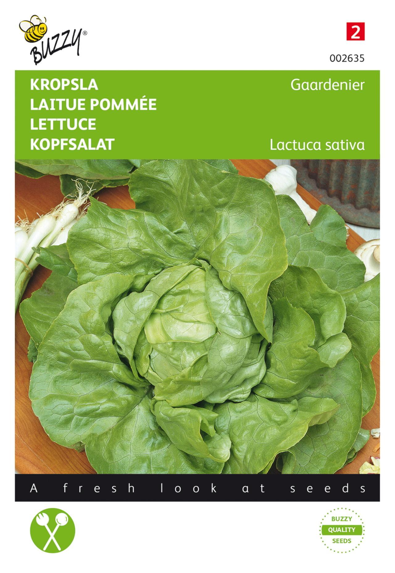 Lactuca sativa 'Gaardenier' plant