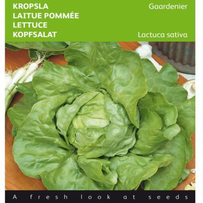lactuca-sativa-gaardenier