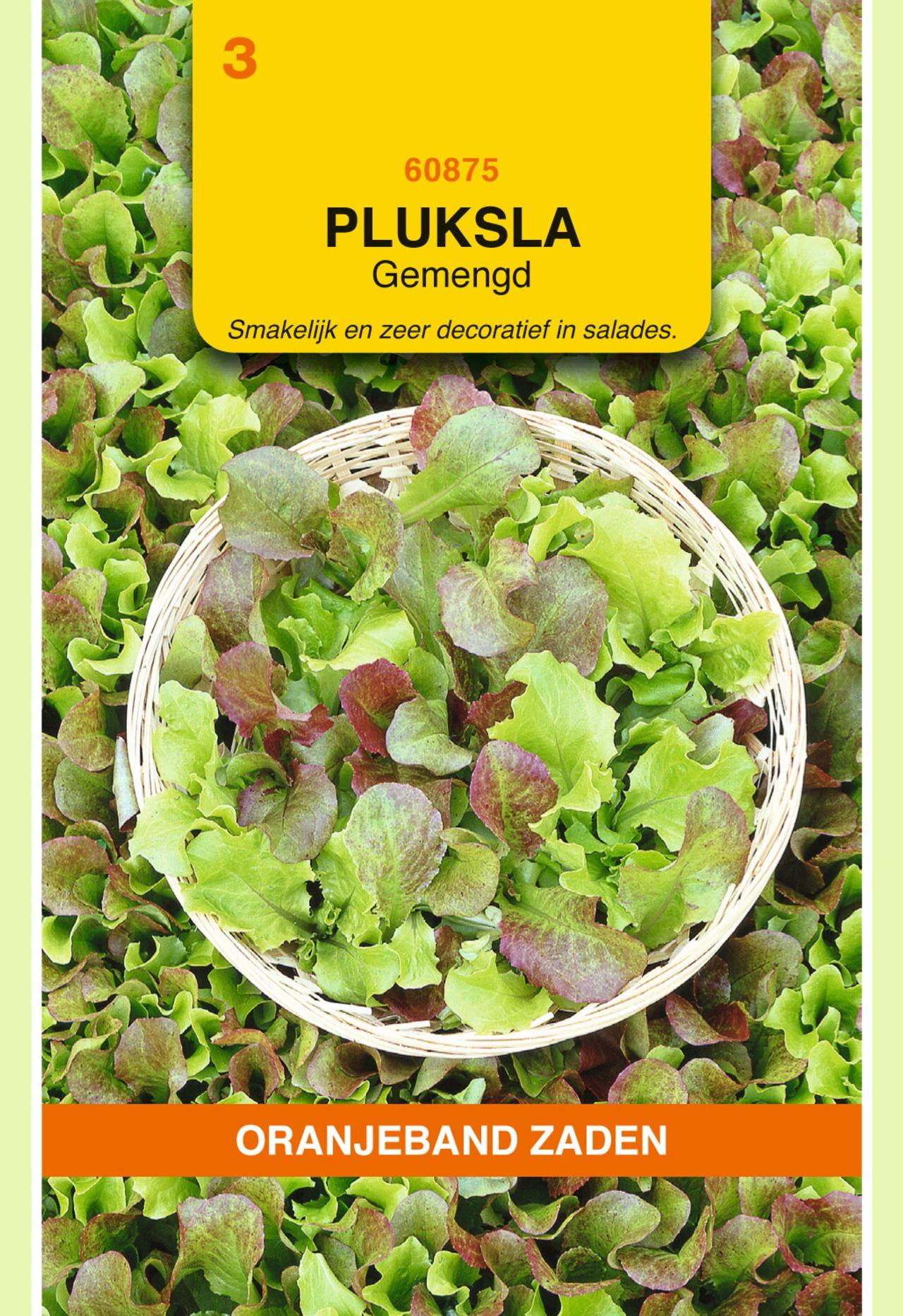 Lactuca sativa 'Gemengd' plant