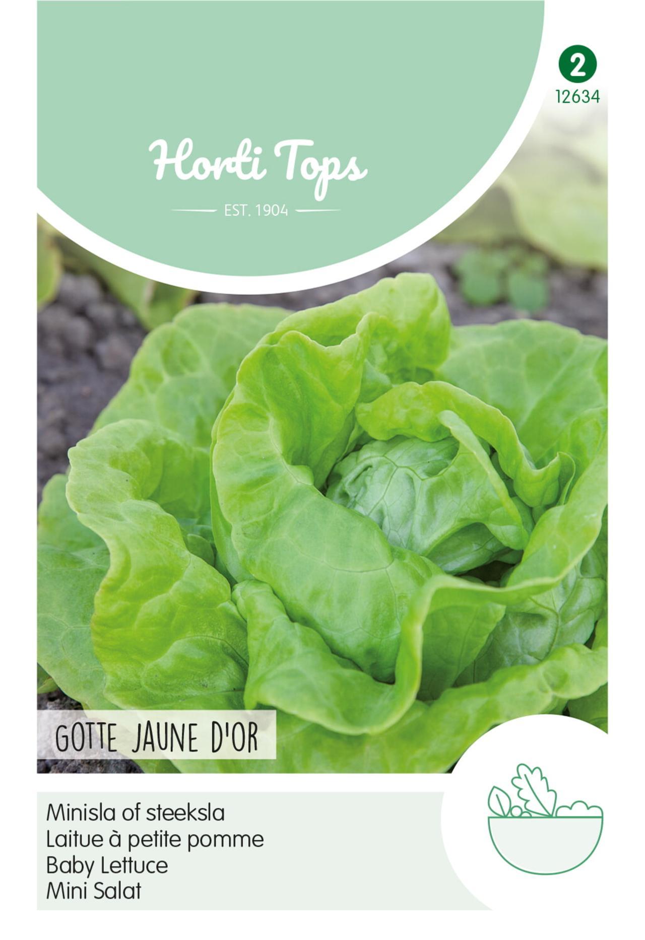 Lactuca sativa 'Gotte Jaune D'Or' plant