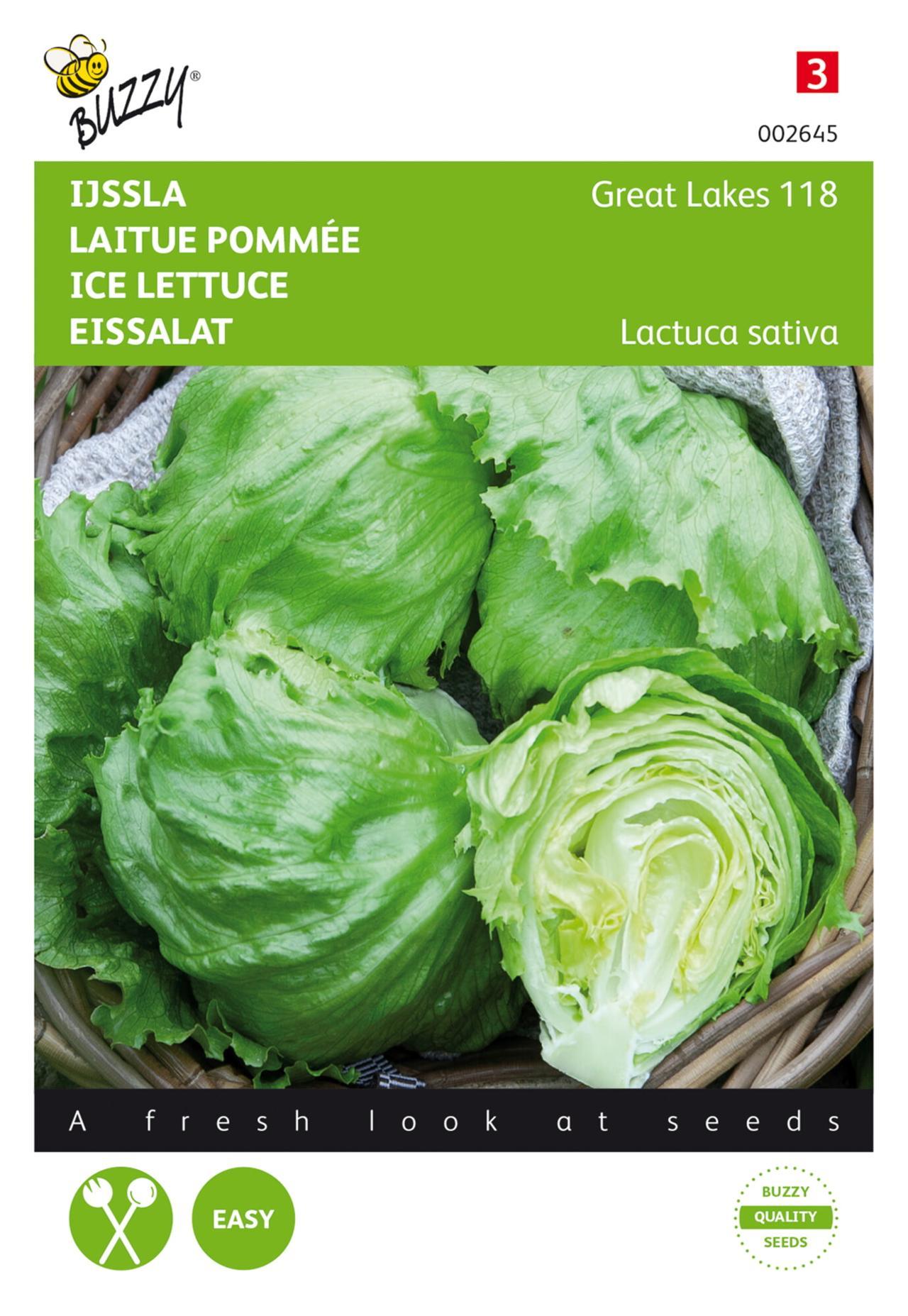 Lactuca sativa 'Great Lakes 118' plant