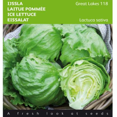 lactuca-sativa-great-lakes-118