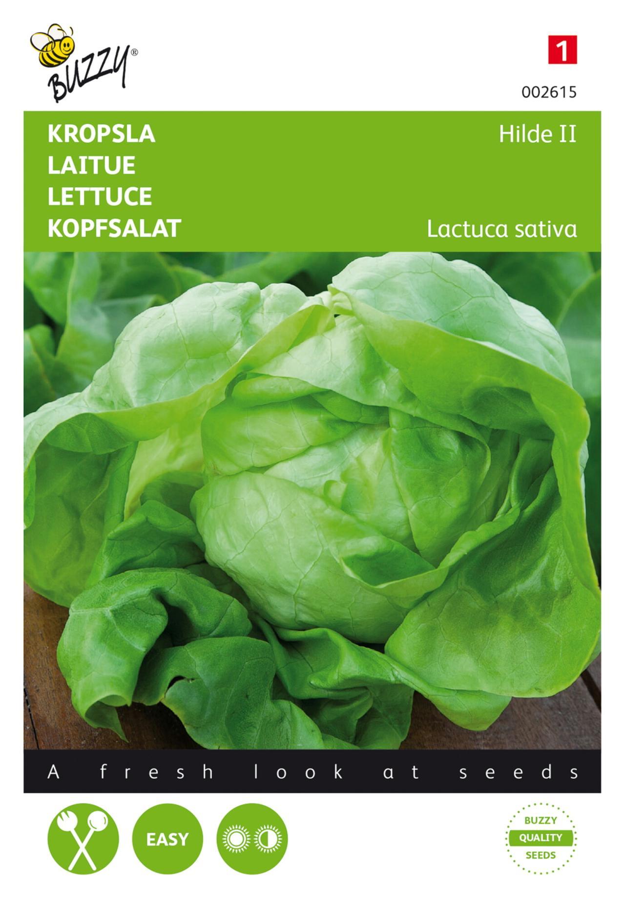 Lactuca sativa 'Hilde II' plant