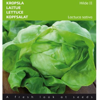 lactuca-sativa-hilde-ii