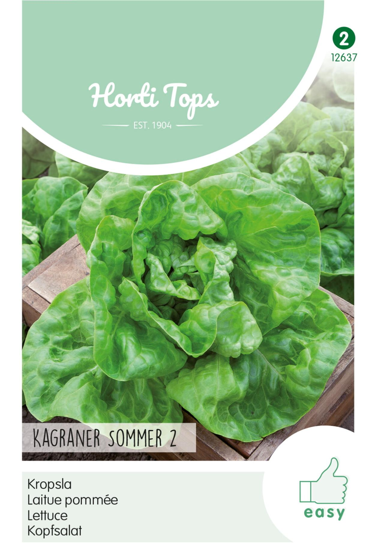 Lactuca sativa 'Kagraner Sommer 2' plant