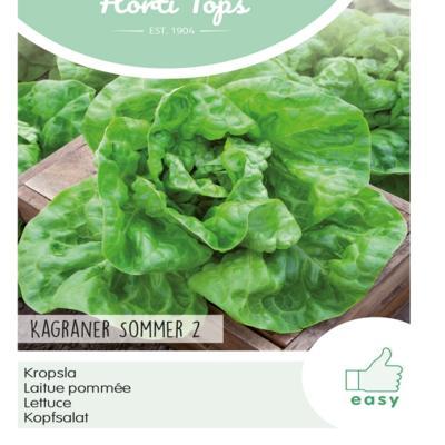 lactuca-sativa-kagraner-sommer-2