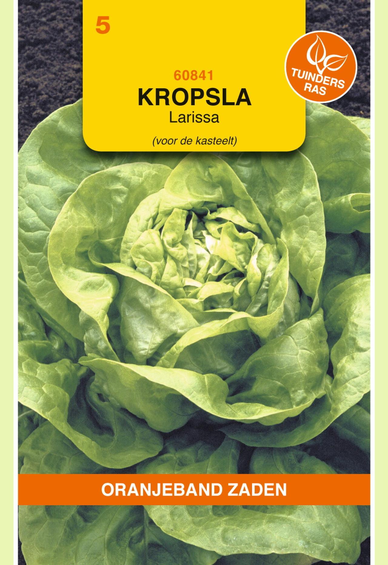 Lactuca sativa 'Larissa' plant