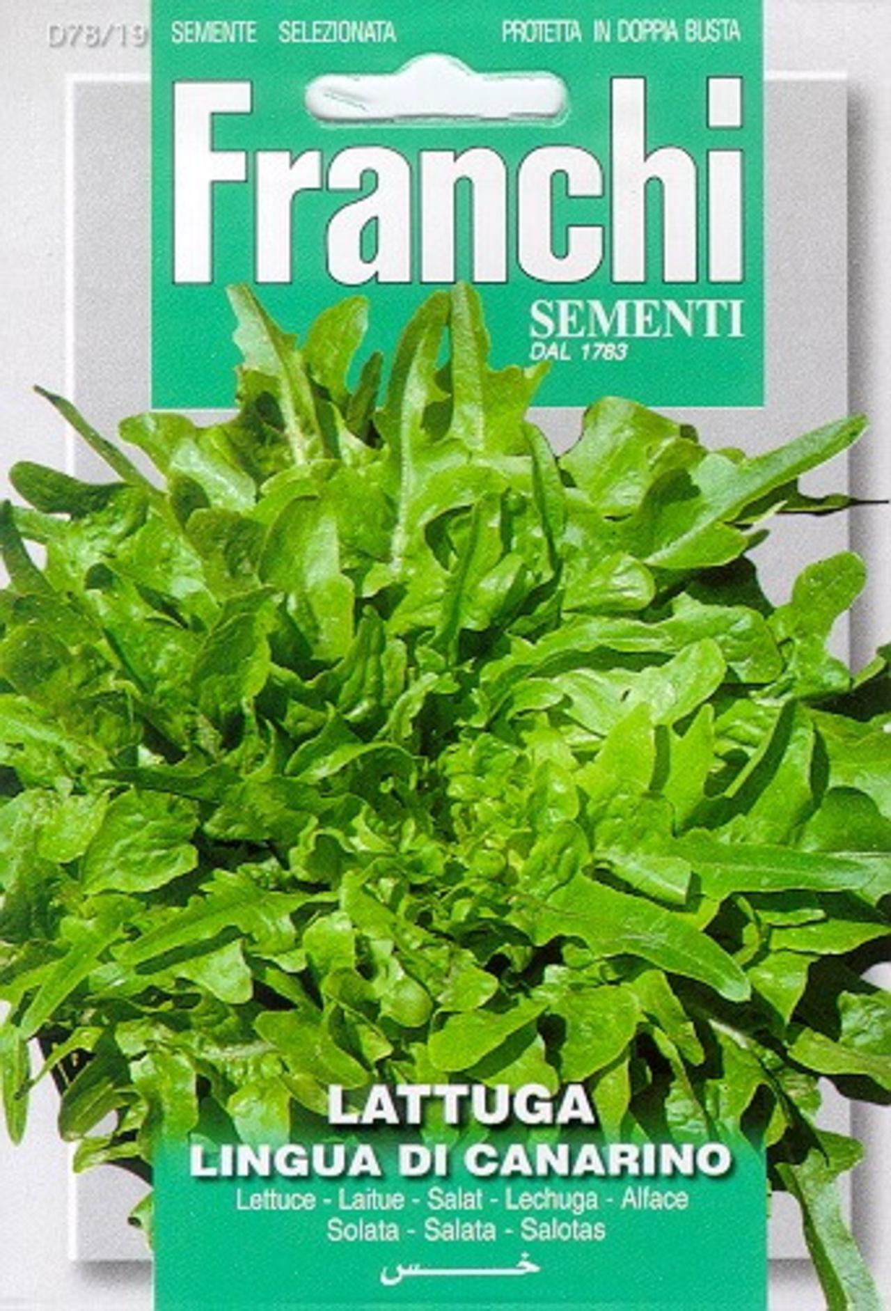 Lactuca sativa 'Lingua Di Canarino' plant