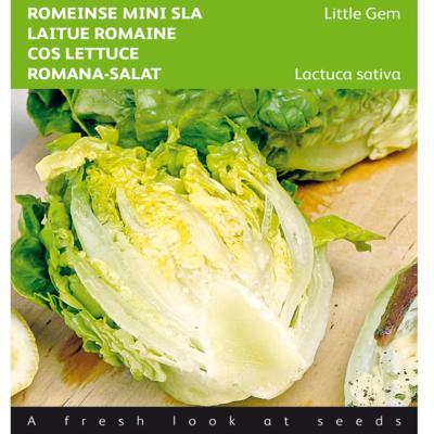 lactuca-sativa-little-gem