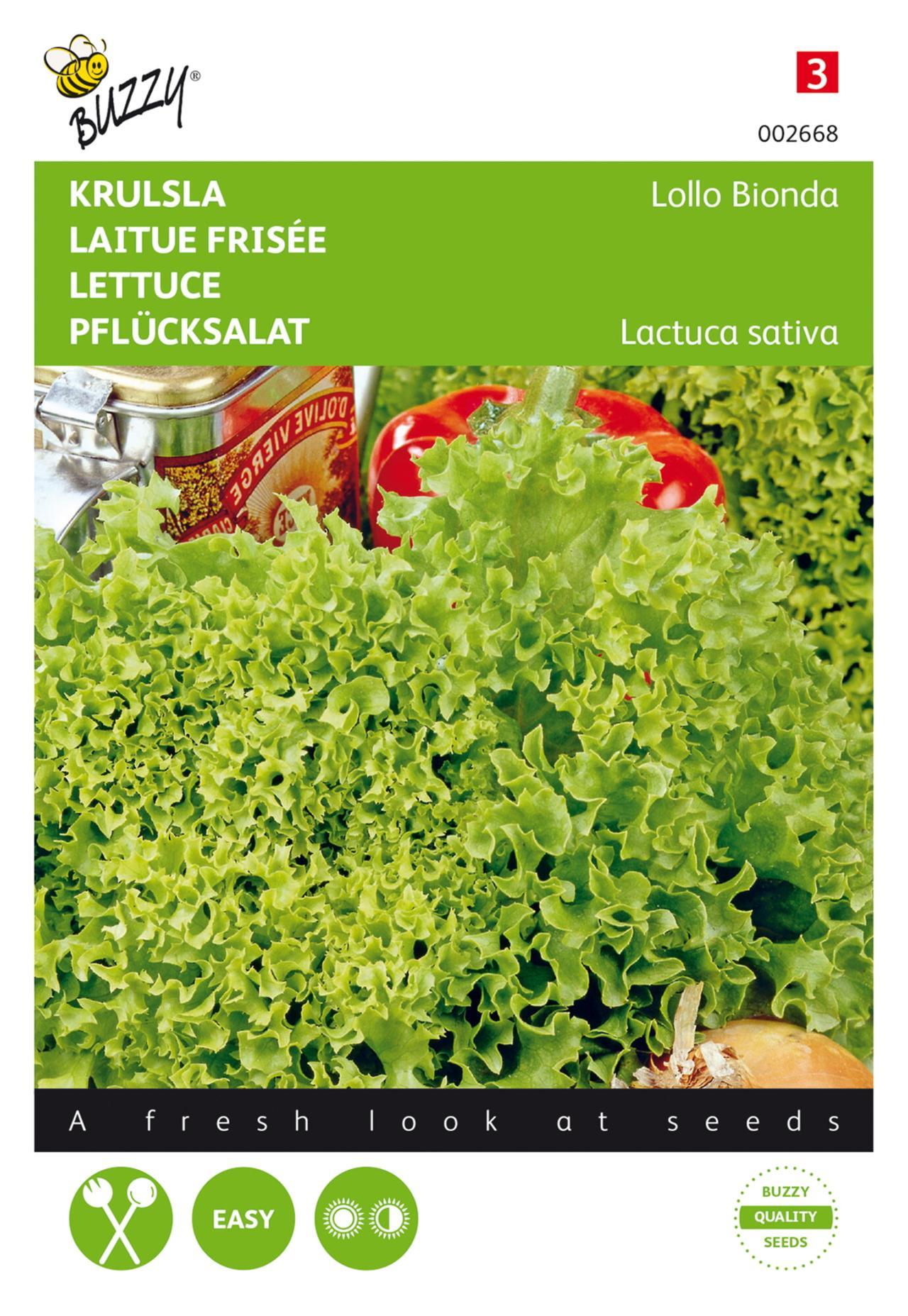 Lactuca sativa 'Lollo Bionda' plant