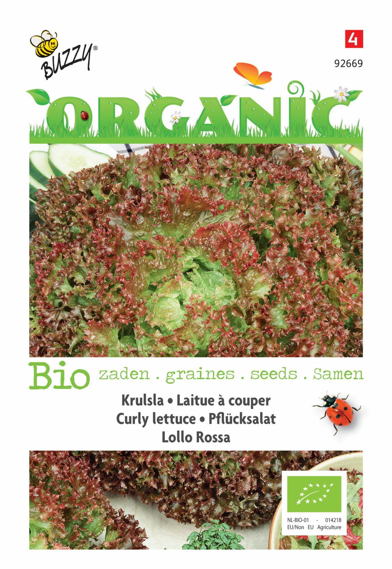 Lactuca sativa 'Lollo rossa' (BIO) plant