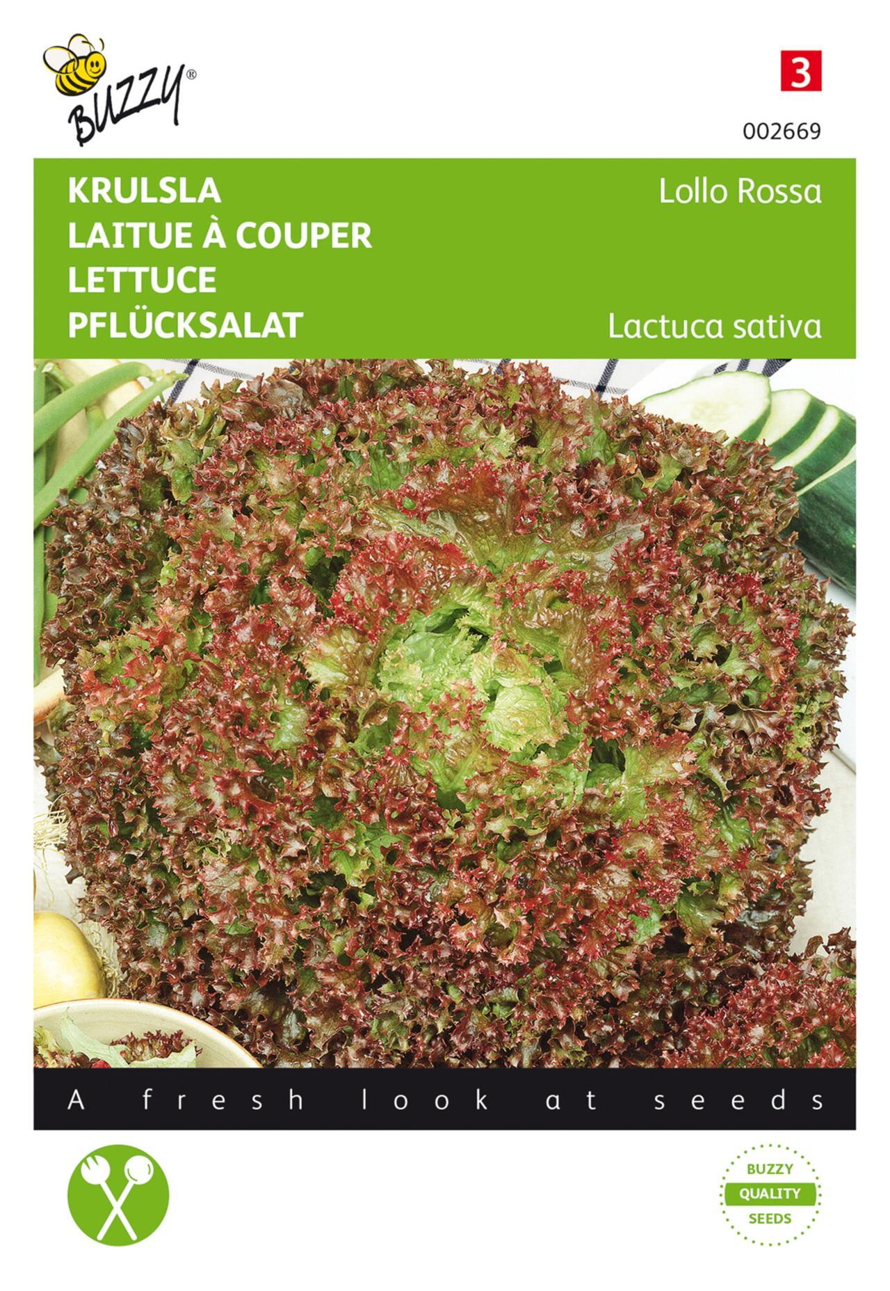 Lactuca sativa 'Lollo Rossa' plant