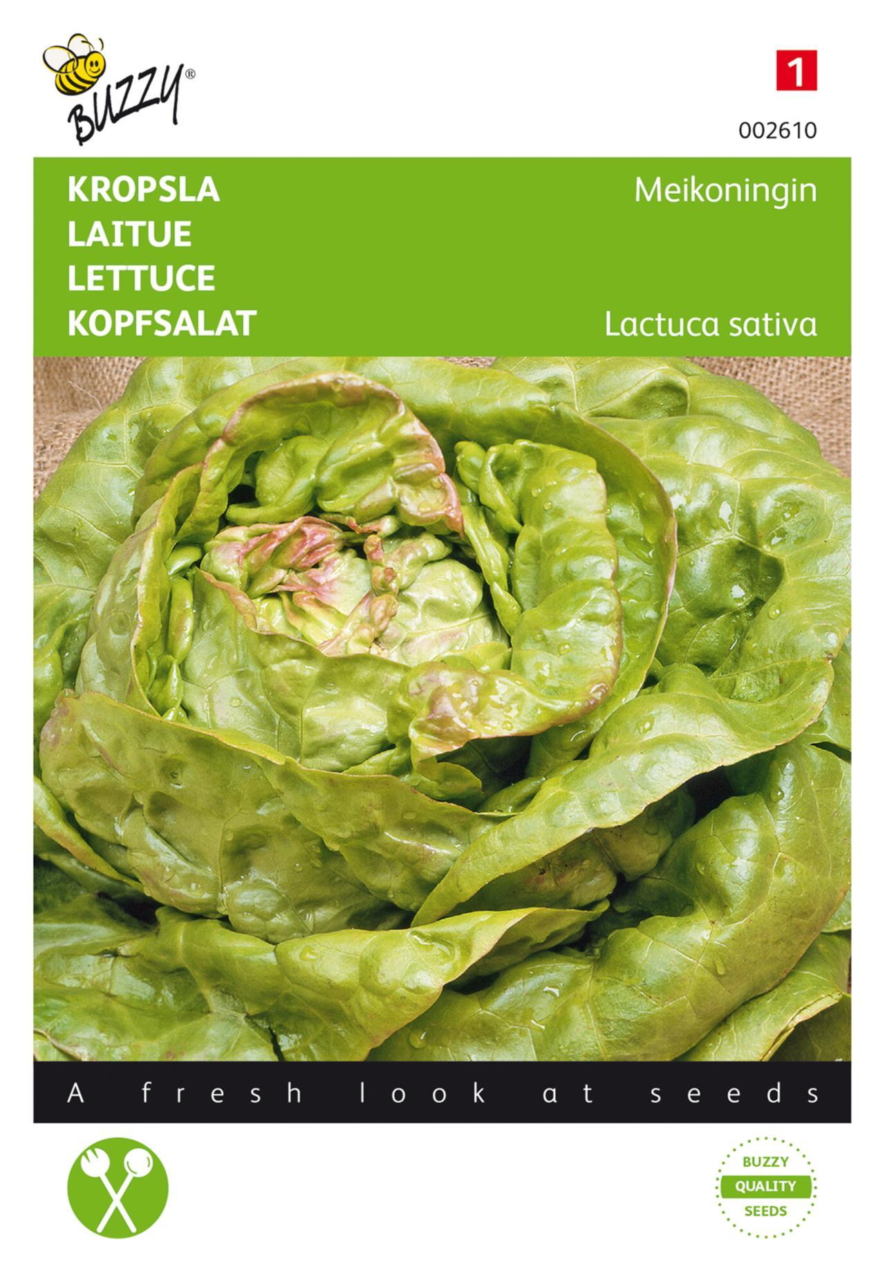 Lactuca sativa 'Meikoningin' plant
