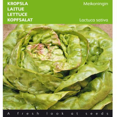 lactuca-sativa-meikoningin