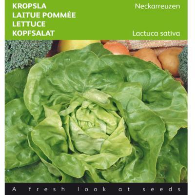 lactuca-sativa-neckarreuzen
