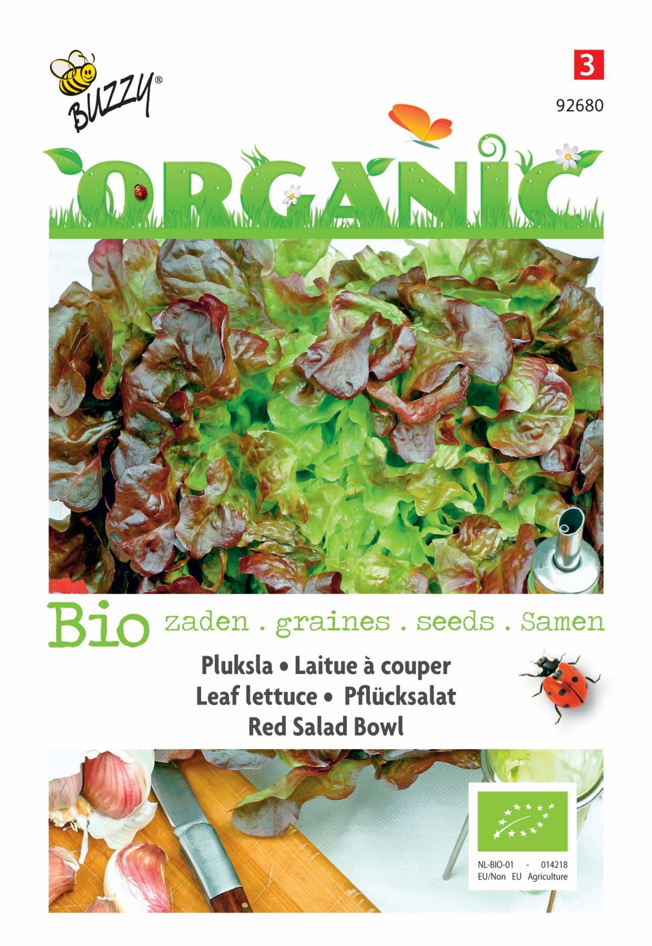 Lactuca sativa 'Red Salad Bowl' (BIO) plant
