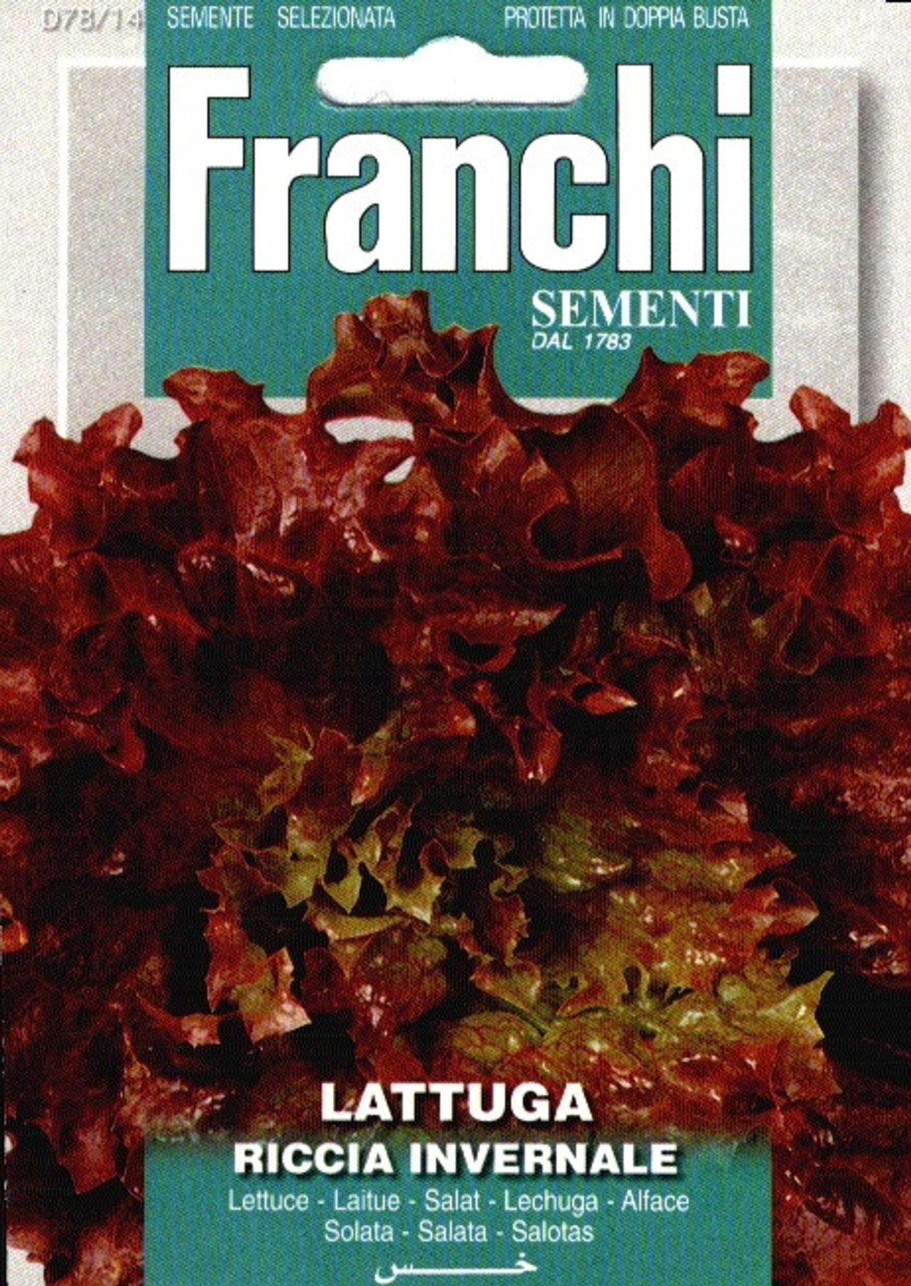 Lactuca sativa 'Riccia Invernale' plant