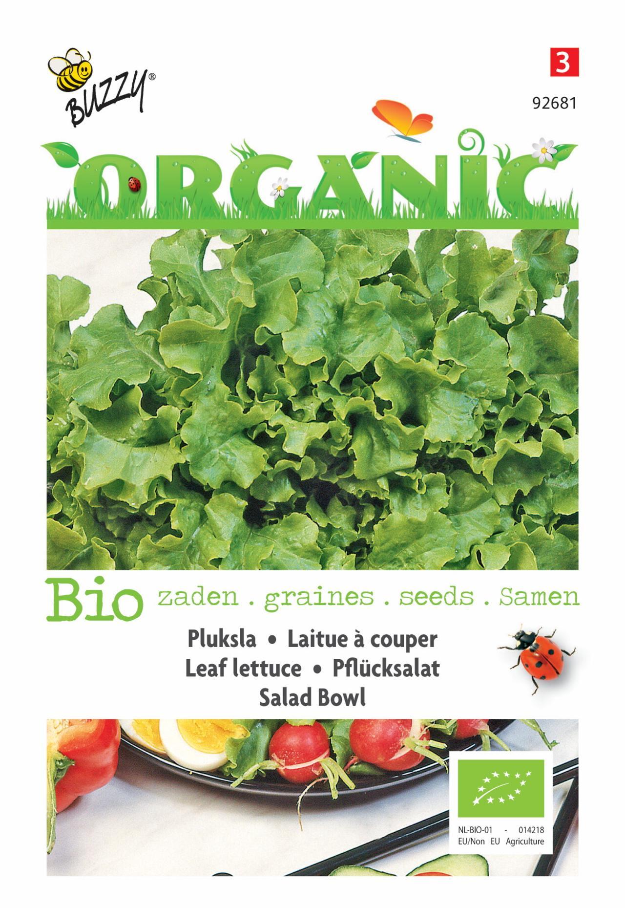 Lactuca sativa 'Salad Bowl, groen' (BIO) plant
