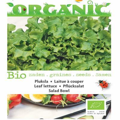 lactuca-sativa-salad-bowl-groen-bio