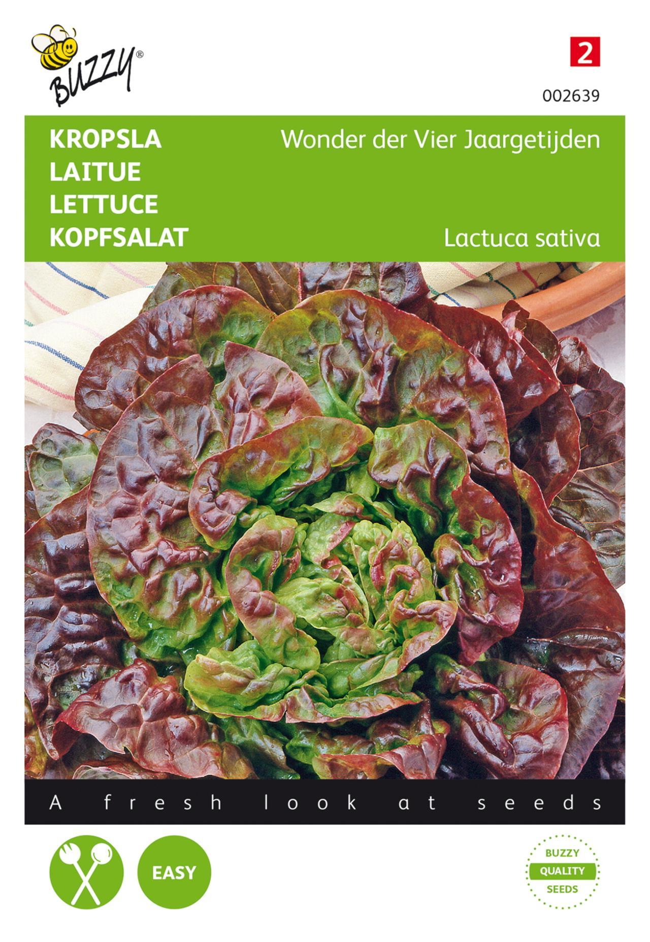 Lactuca sativa 'Wonder der Vier Jaargetijden' plant