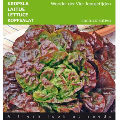 lactuca-sativa-wonder-der-vier-jaargetijden