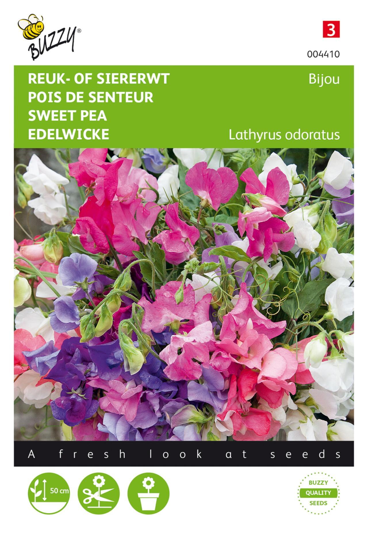 Lathyrus odoratus 'Bijou' plant