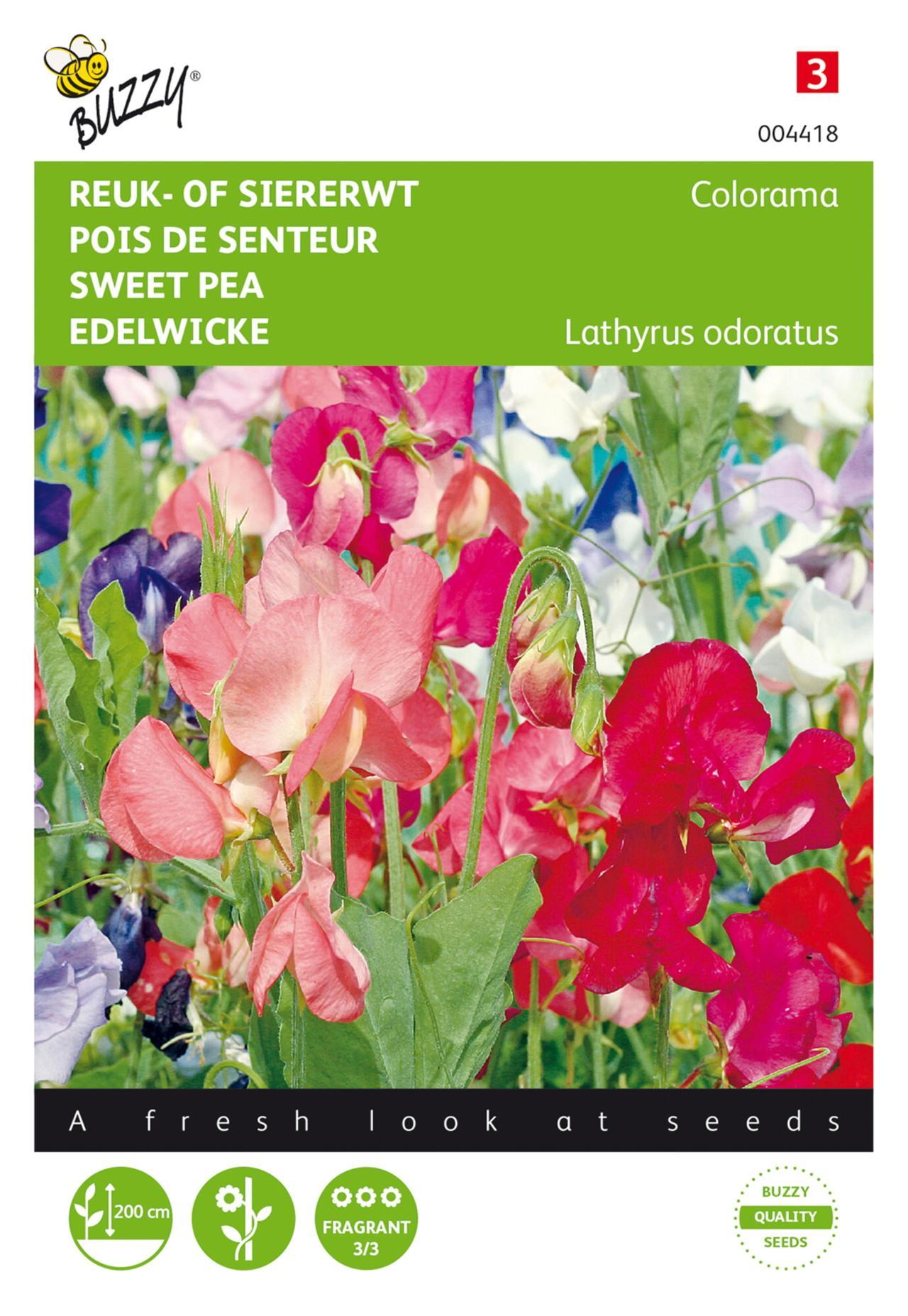 Lathyrus odoratus 'Colorama' plant