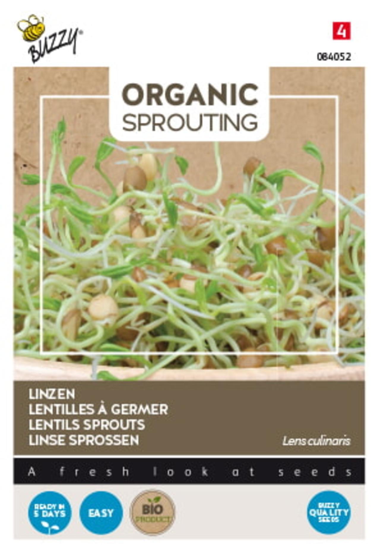 Lens culinaris  (BIO) plant