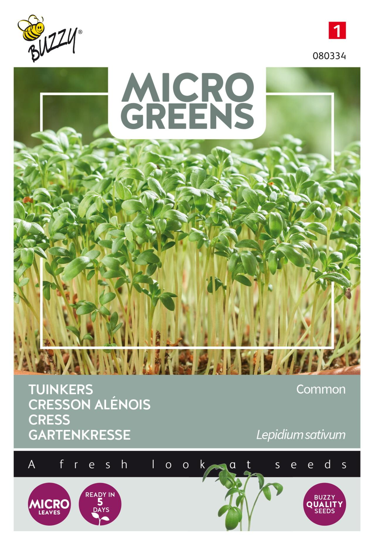 Lepidium sativum (microgreens) plant