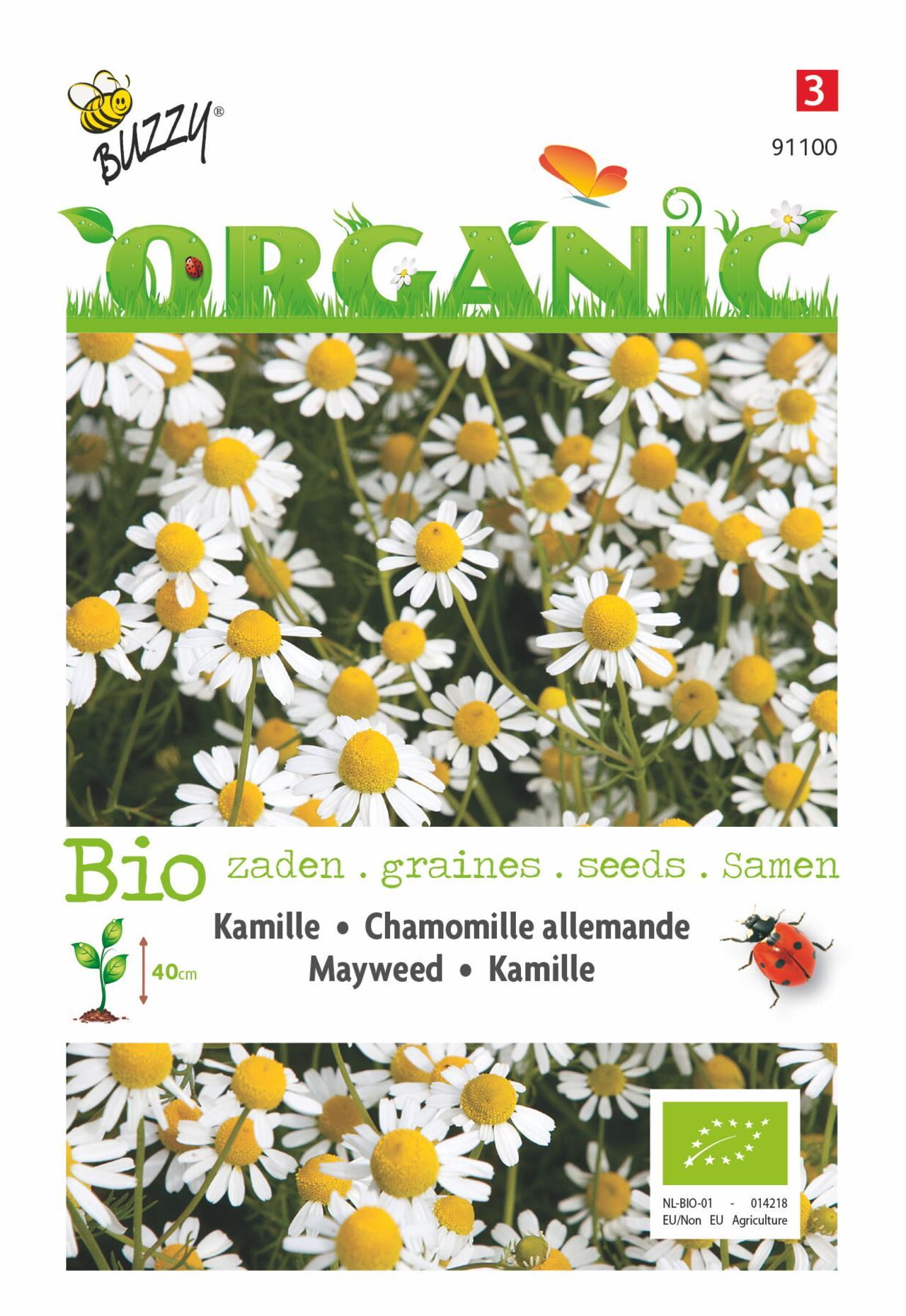 Matricaria chamomilla (BIO) plant