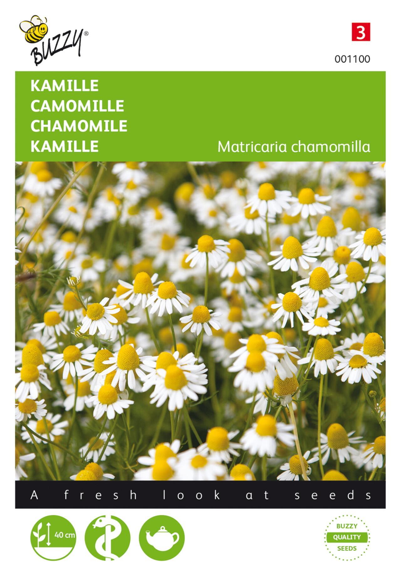 Matricaria chamomilla plant
