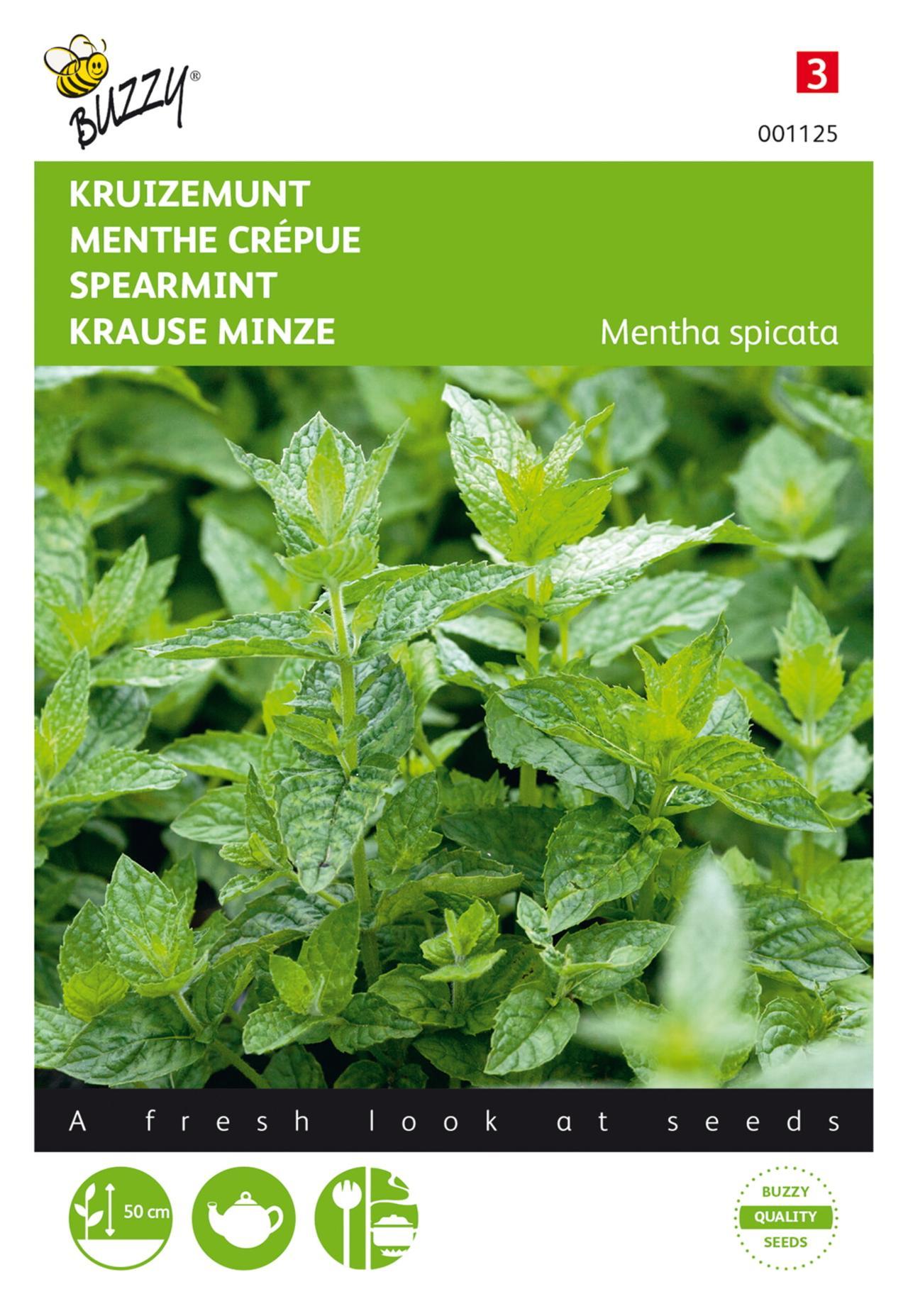 Mentha spicata plant