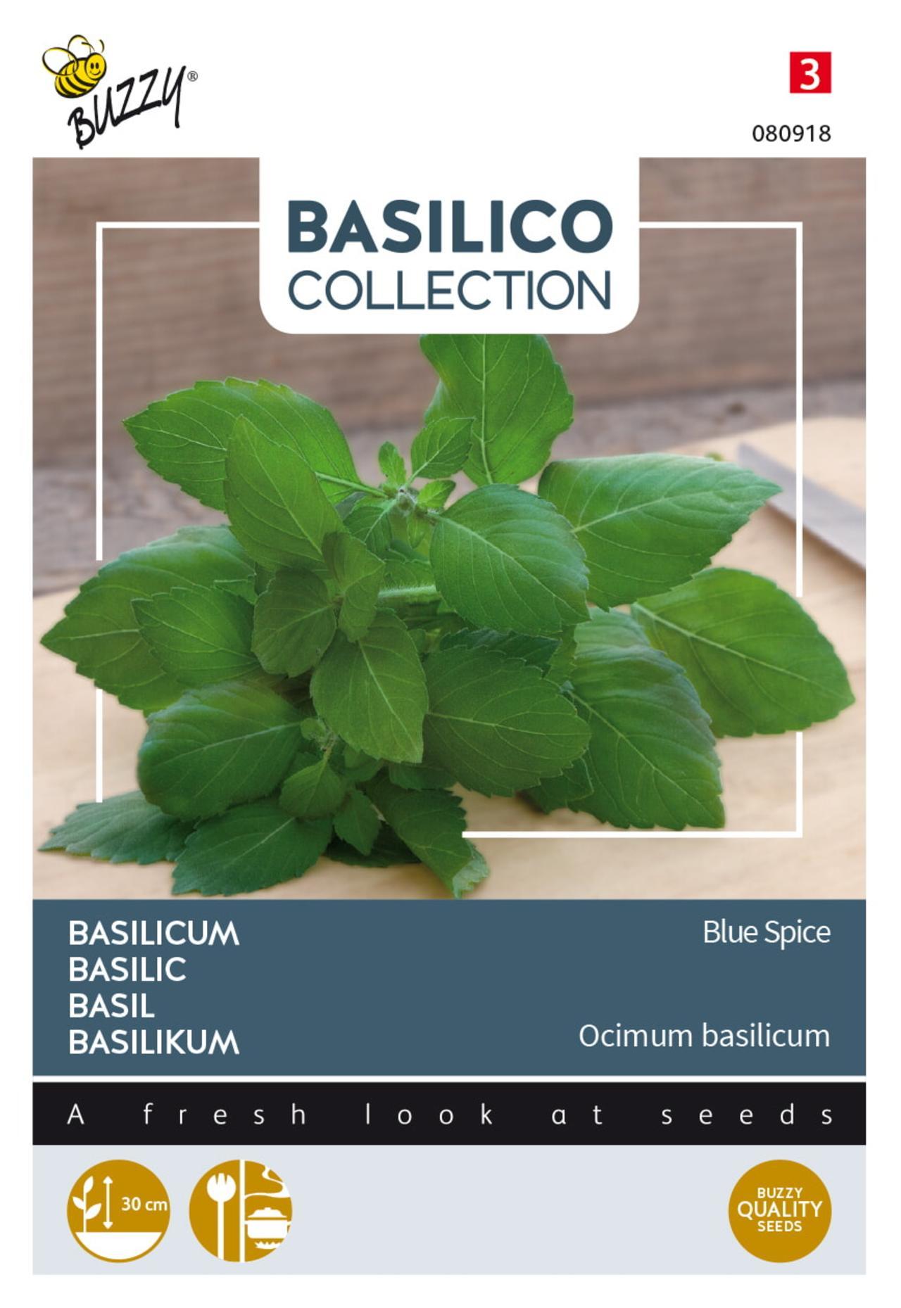 Ocimum americanum x Ocimum basilicum 'Blue Spice' plant