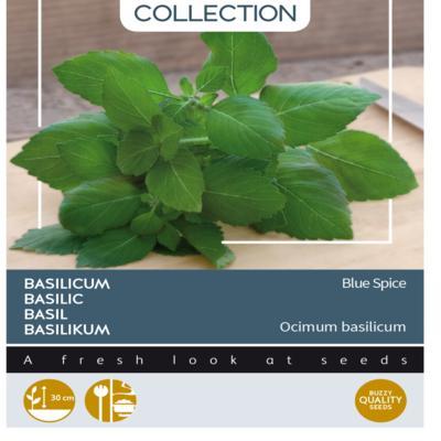 ocimum-americanum-x-ocimum-basilicum-blue-spice