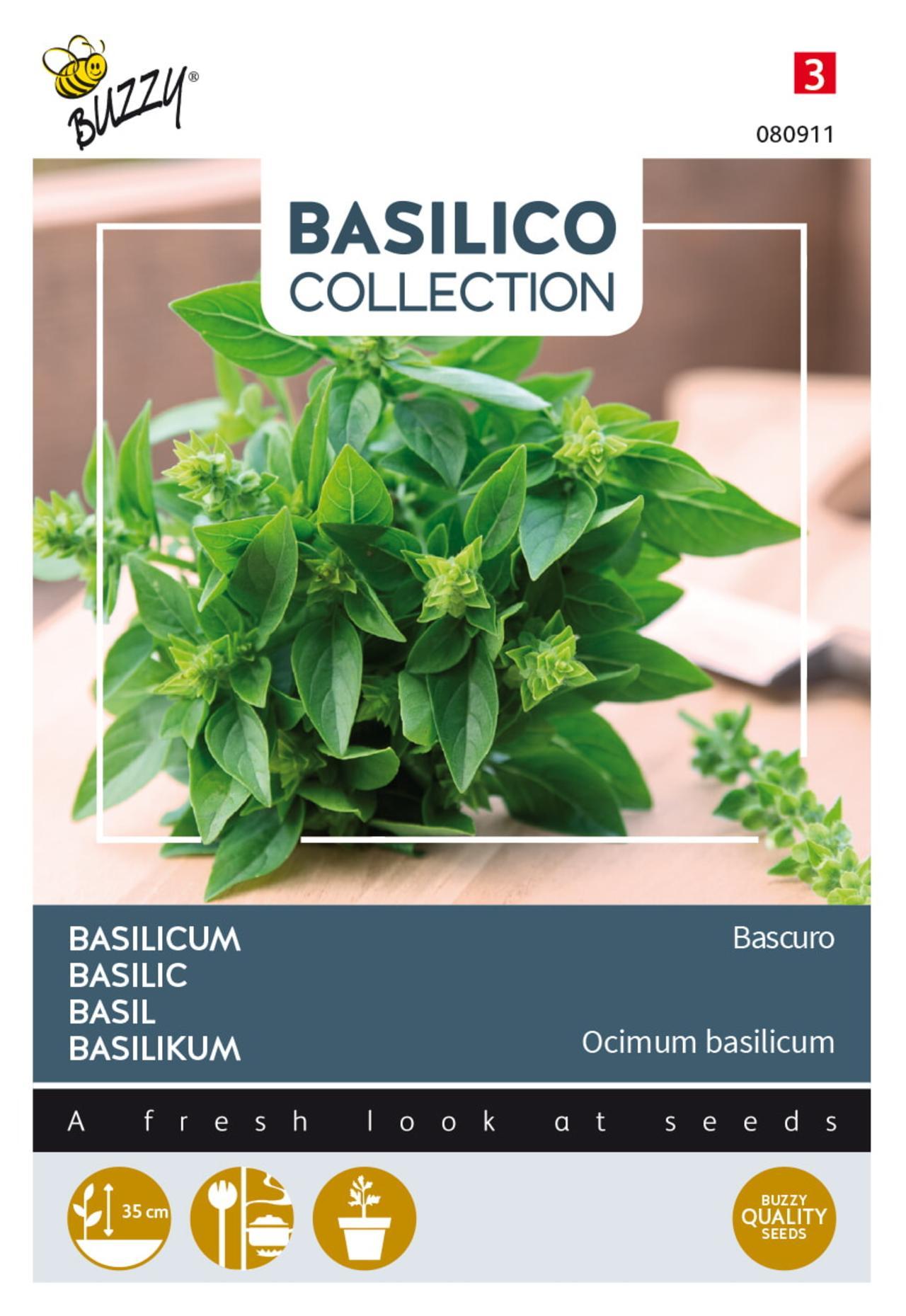 Ocimum basilicum 'Bascuro' plant