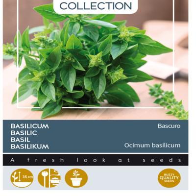 ocimum-basilicum-bascuro