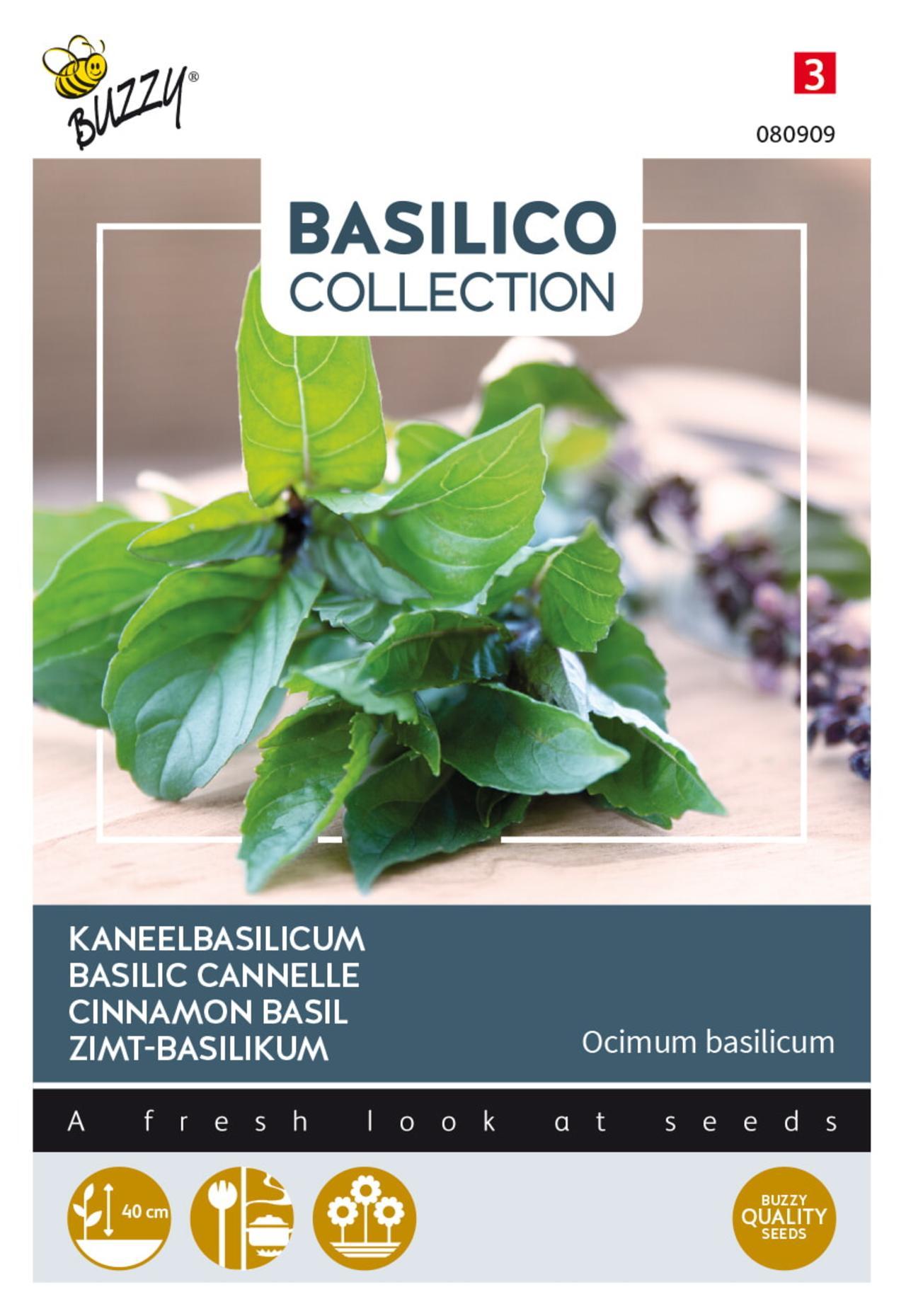 Ocimum basilicum cinnamomum plant