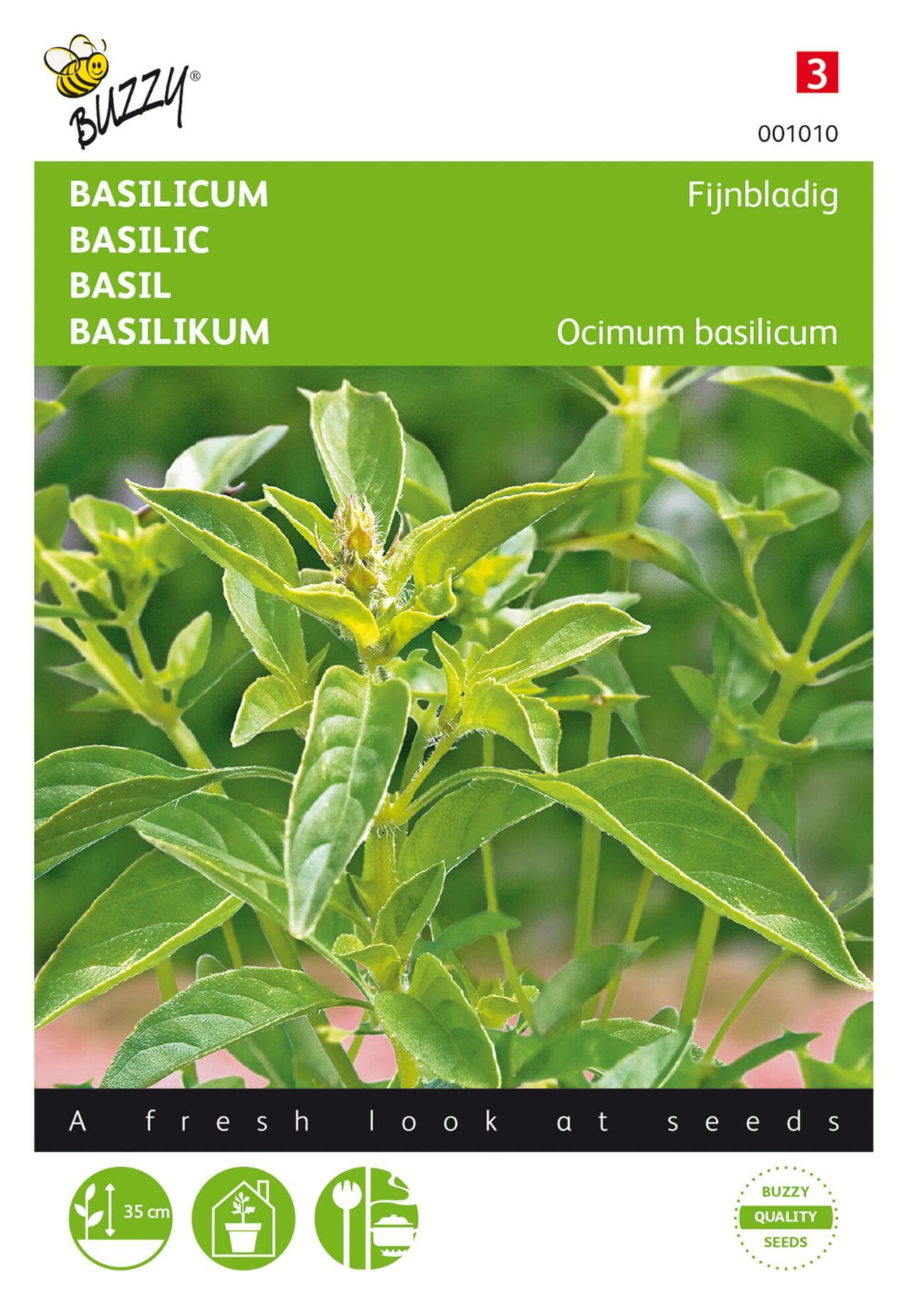 Ocimum basilicum minumum  plant