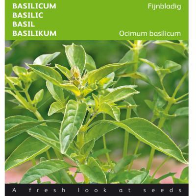 ocimum-basilicum-fijne