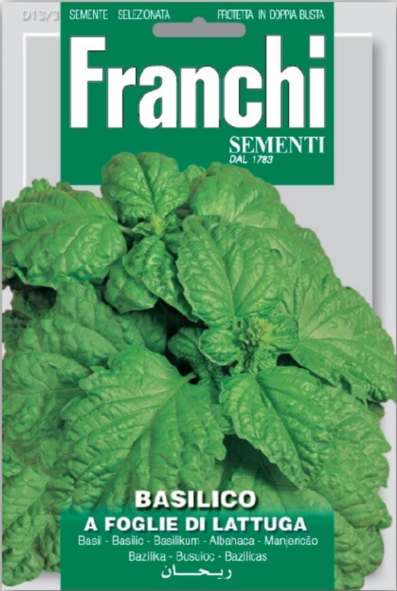Ocimum basilicum 'Foglie Di Lattuga' plant