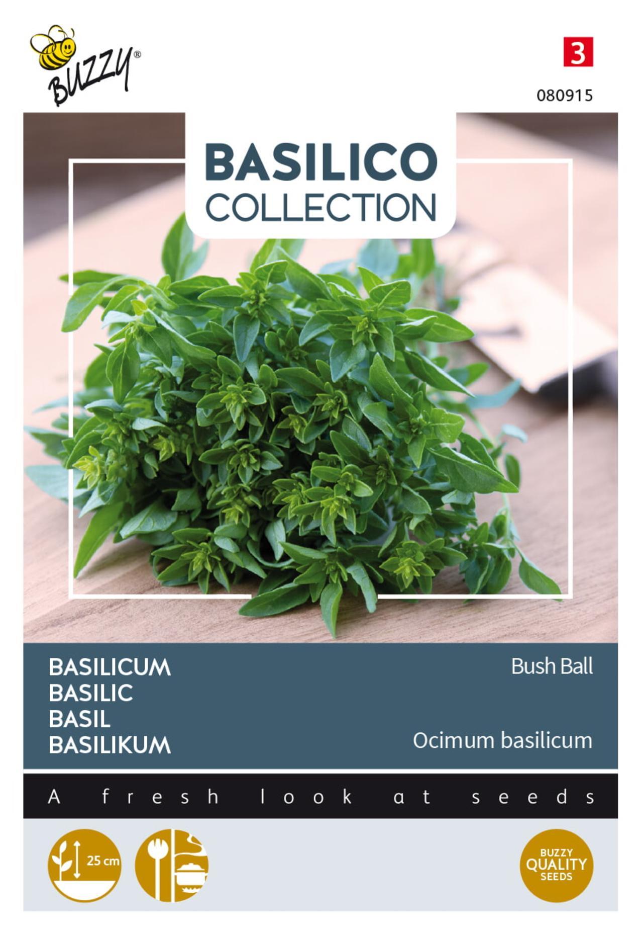 Ocimum basilicum 'Greek Basil Bush Ball' plant