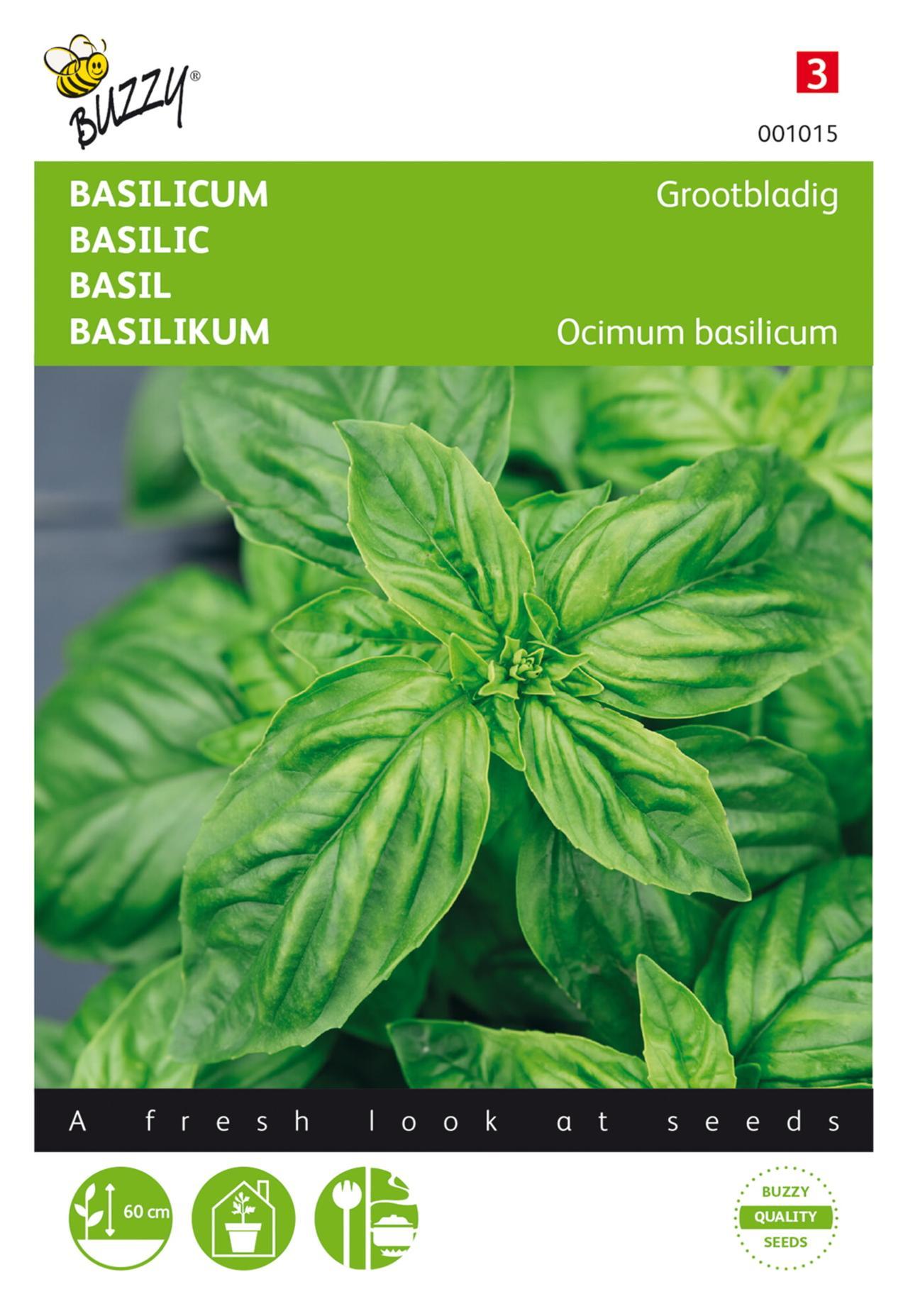 Ocimum basilicum 'Grootbladig' plant