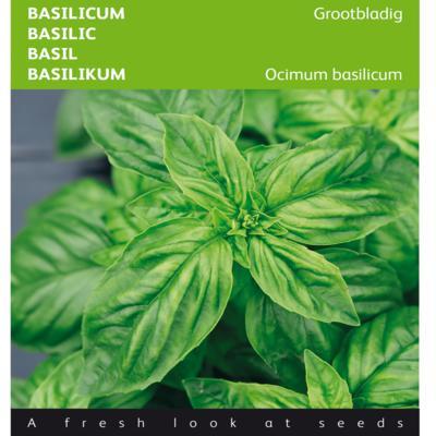 ocimum-basilicum-grootbladig