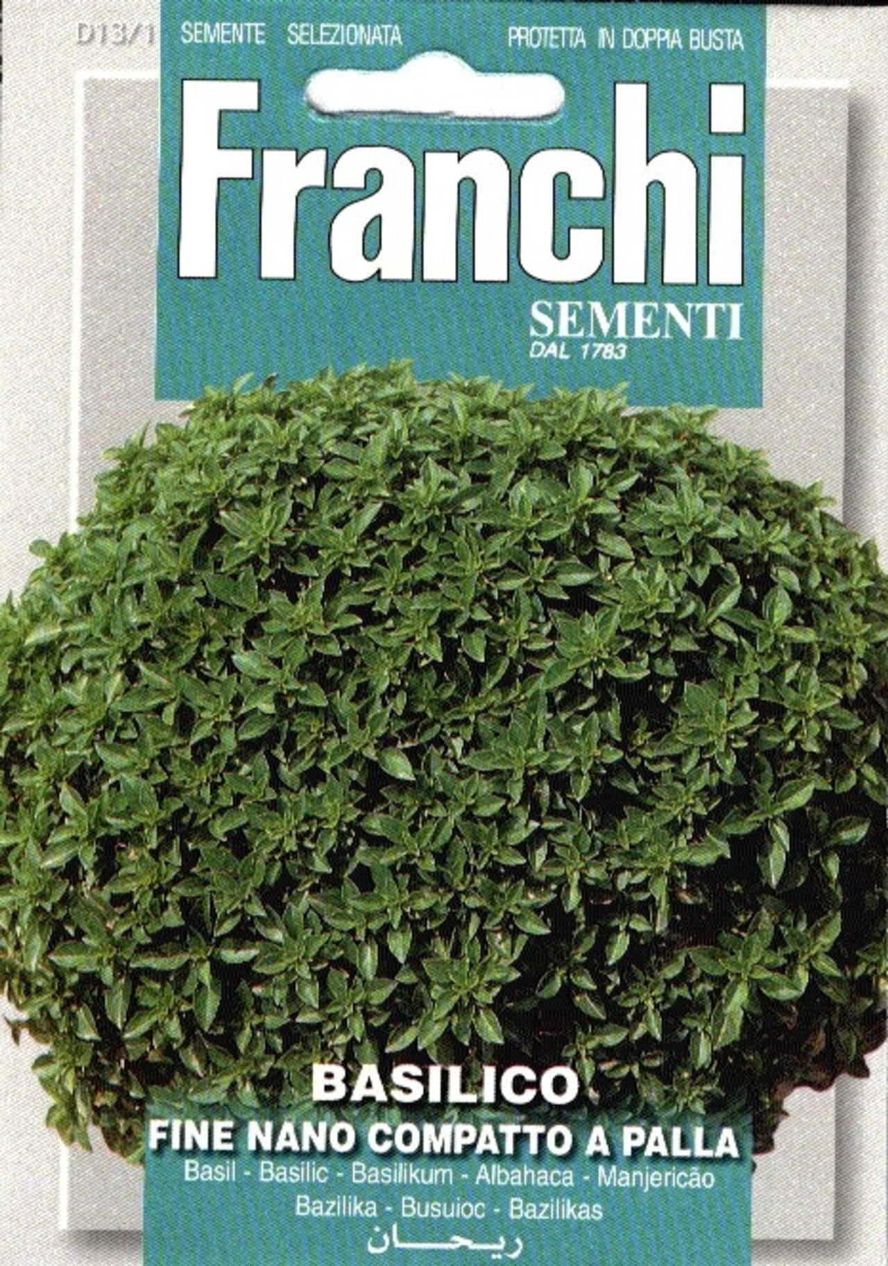 Ocimum basilicum 'Nano-Palla' plant