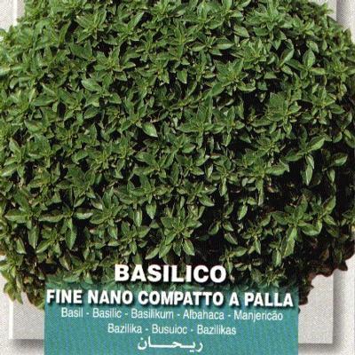 ocimum-basilicum-nanopalla